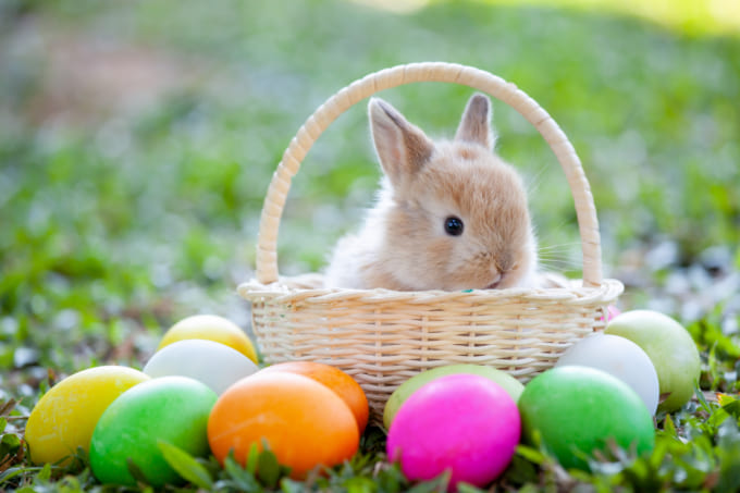Cute little bunny in the basket and easter eggs in the meadow